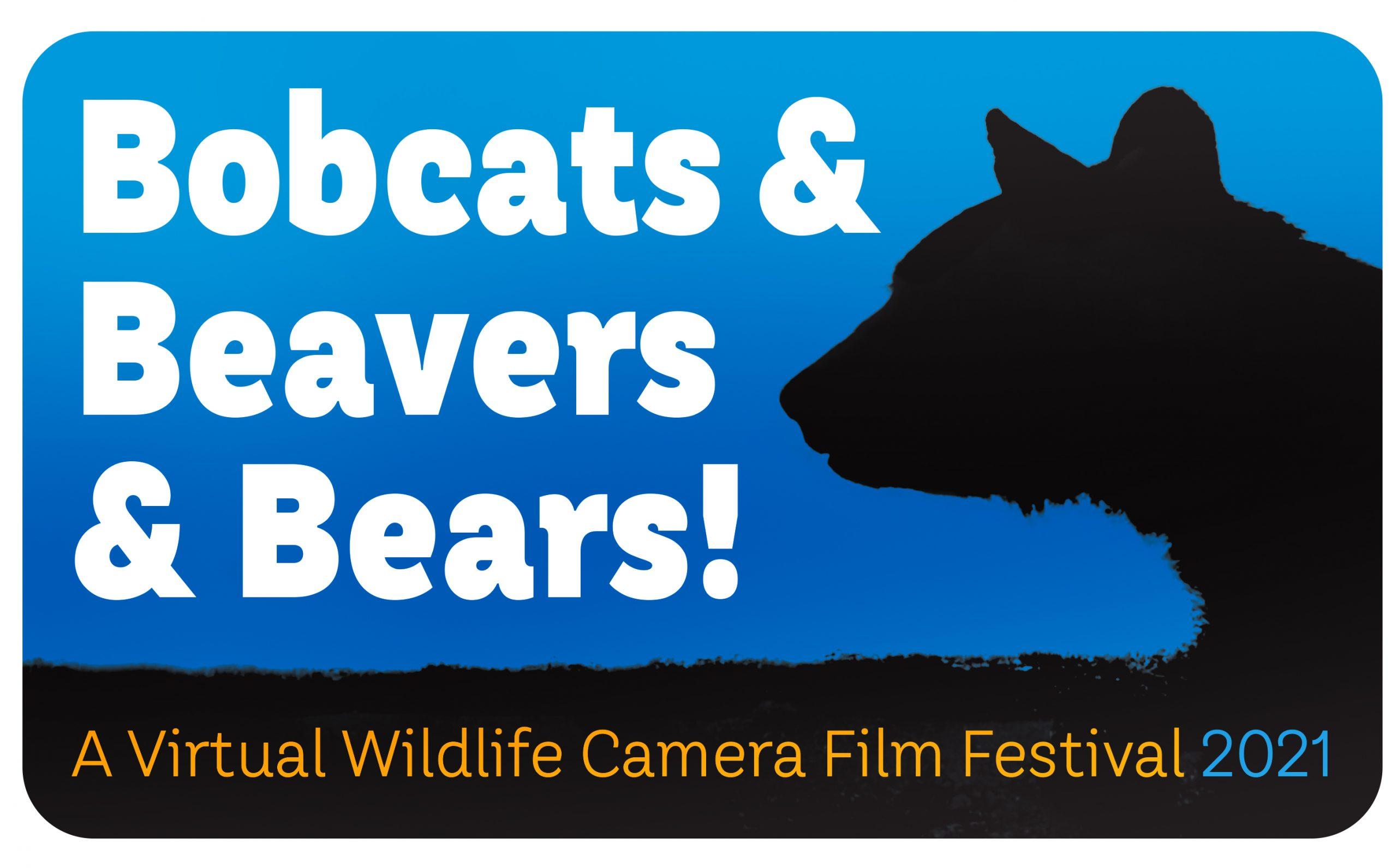 Bobcats & Beavers & Bears! A Virtual Wildlife Camera Film Festival