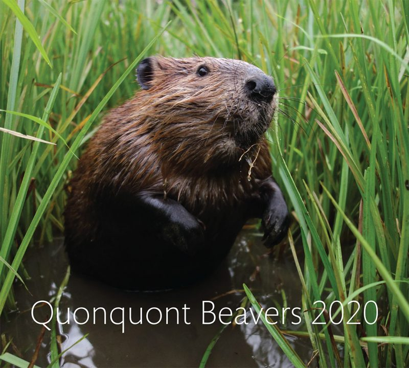 Quonquont Beavers 2020 Wall Calendar