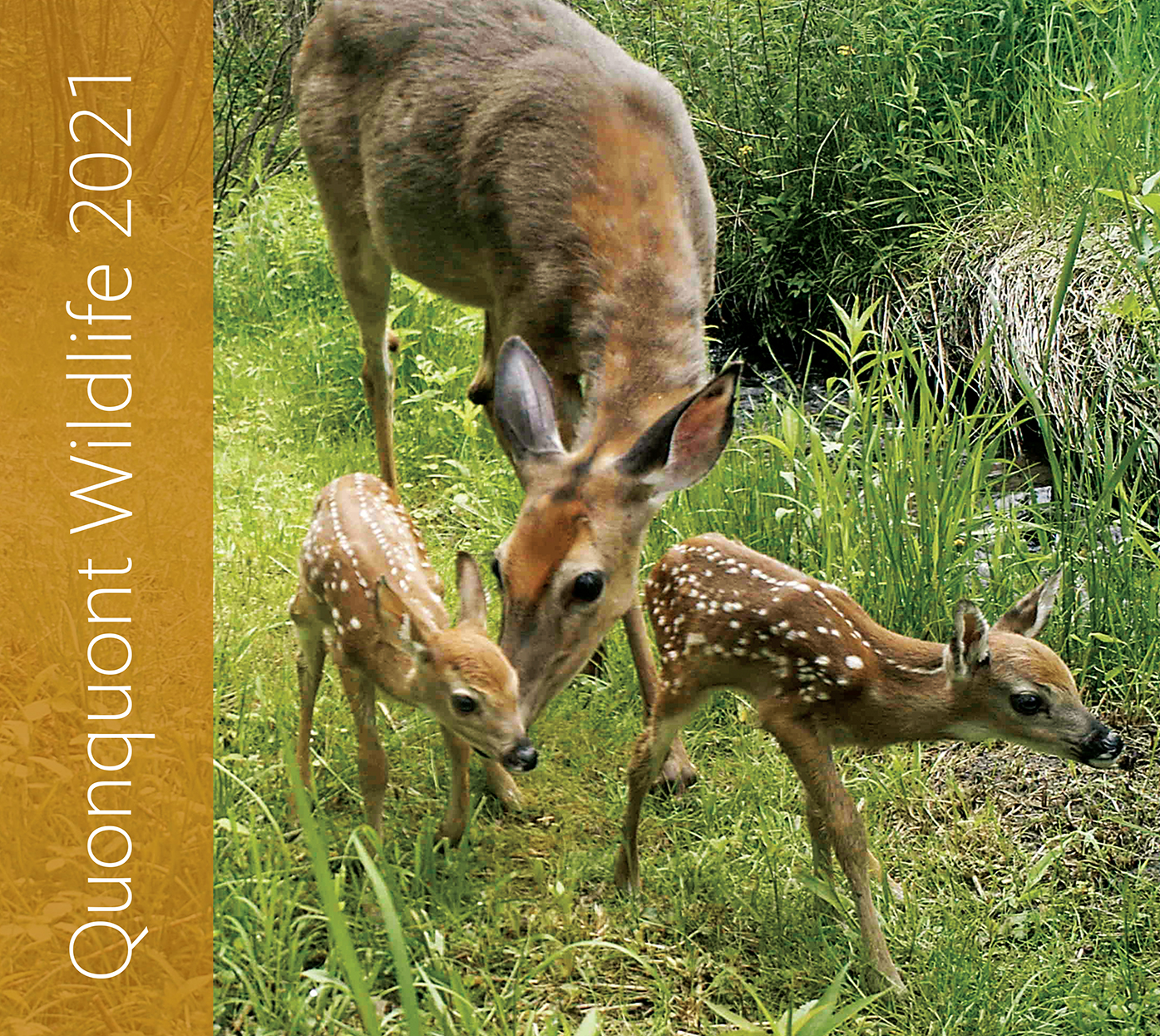 Quonquont Wildlife 2021 Wall Calendar