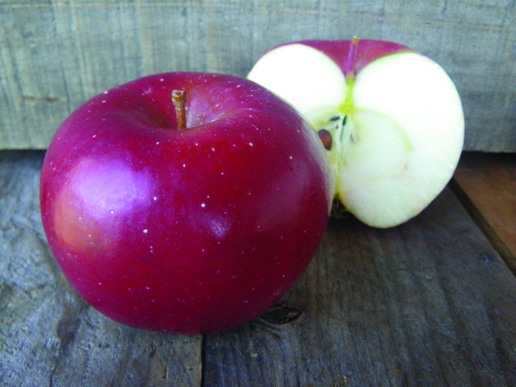 Rome apples@QQ 10-7-11 – Quonquont Farm